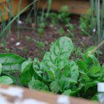 Claves para cultivar tu propio huerto urbano